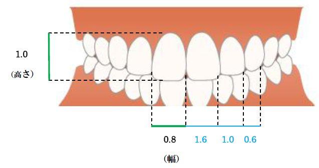 歯のサイズ